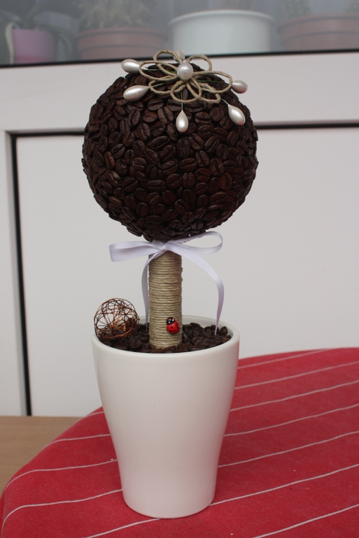 Кофейное дерево для Леночки