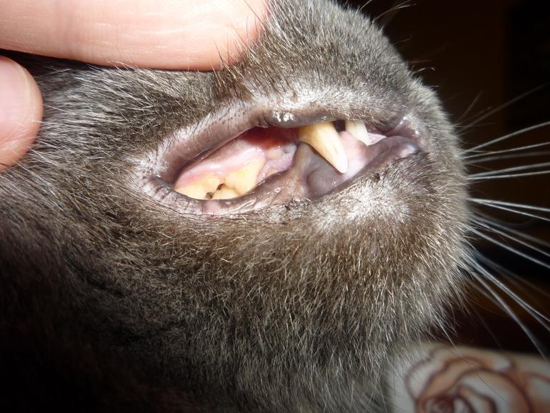 Как открыть коту рот фото