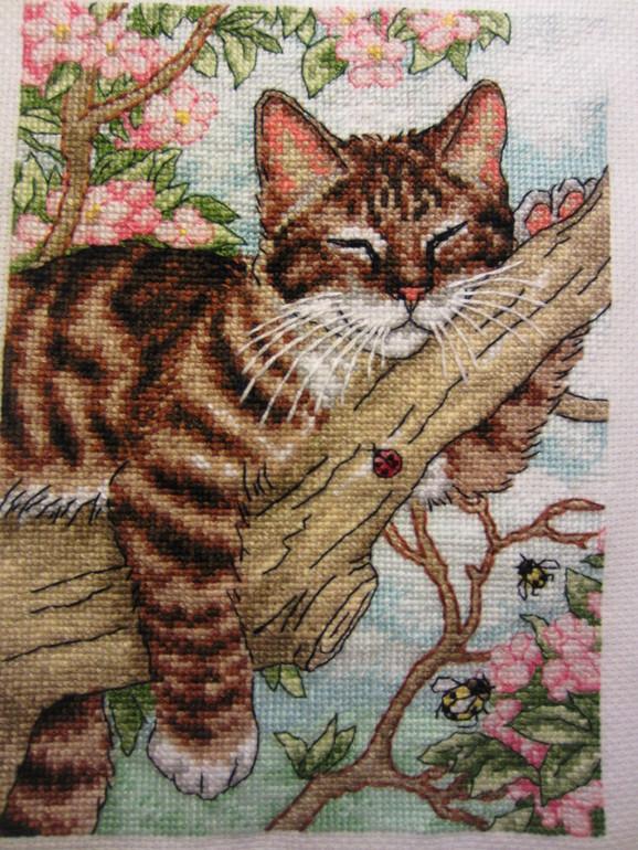 Спящий котенок на дереве