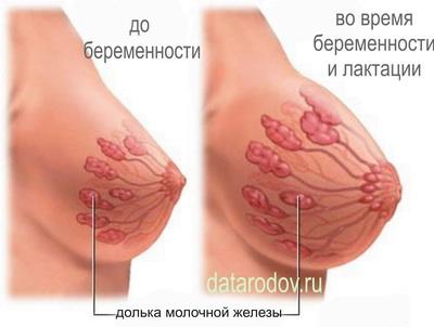 При беременности грудь твердая