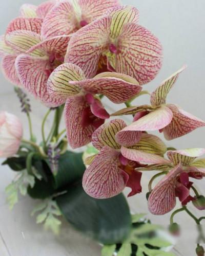 Орхидея фаленопсис (9 цветков) (бордовая-тигровая)