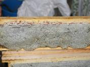 Сотовый мёд с ЛПХ Алтайского края