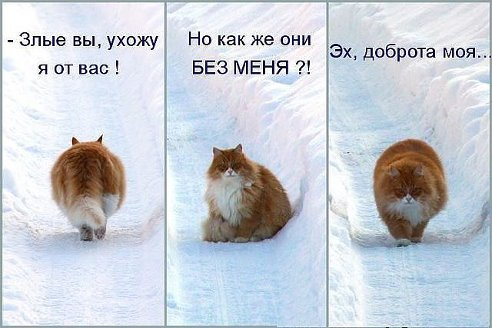 Котик)