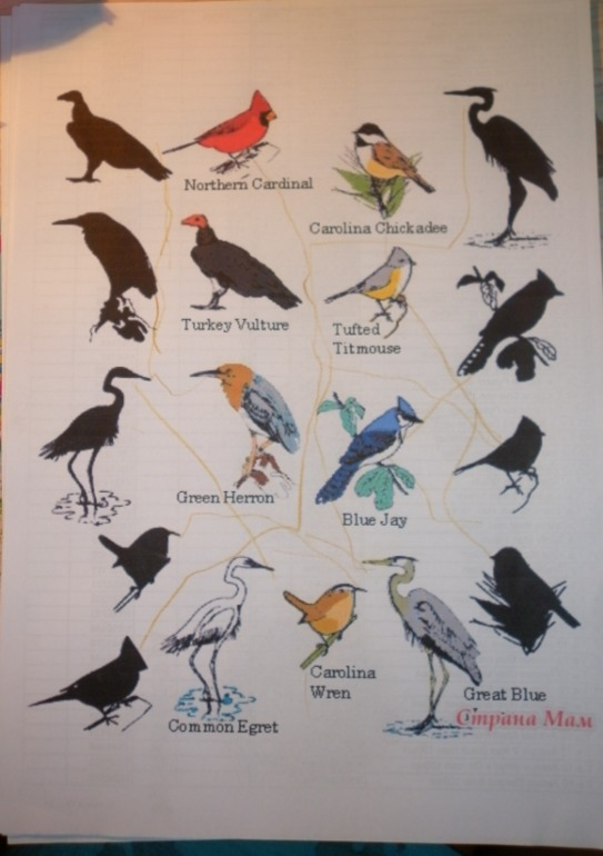 importance of animals and birds essay Wildlife traditionally refers to undomesticated animal species, but has come to include all plants, fungi, and other organisms that grow or live wild in an area without being introduced by humans [1.