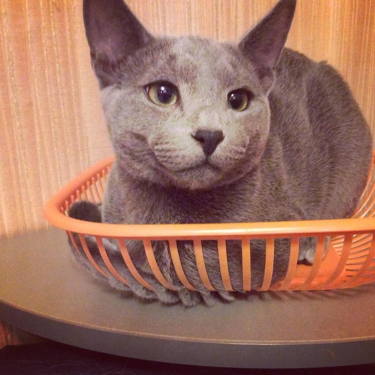 Какой корм лучше для кошек? – Яндекс. Знатоки