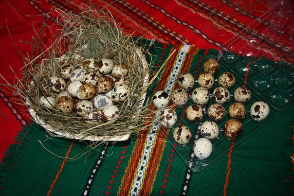 Домашние яйца и птица