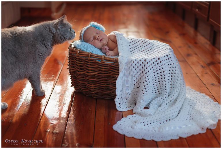 Любопытный котик )