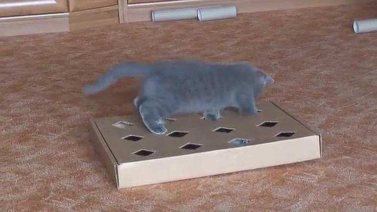 Что можно сделать своими руками для котёнка