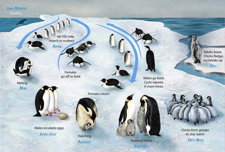 Занятие Пингвины Часть 3 (Где моя мама?)