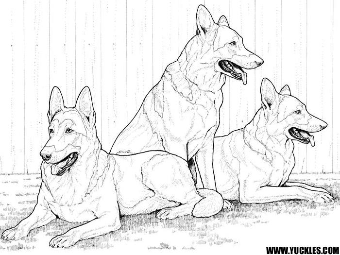 рисунок собака овчарка
