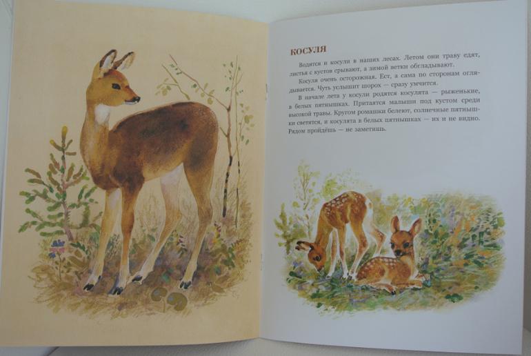 Иллюстрации рисунки бианки