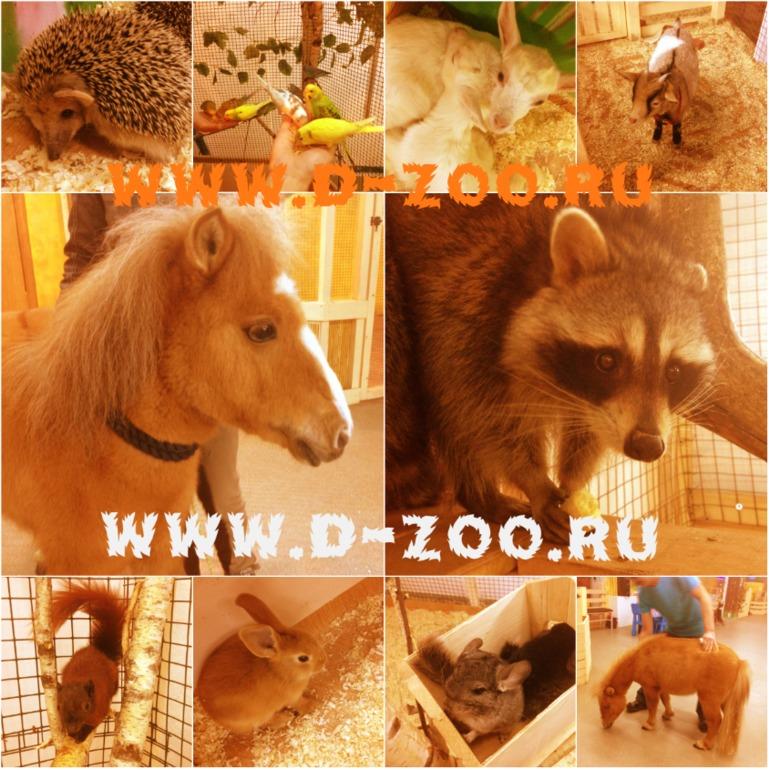 Контактный зоопарк Теплый Стан