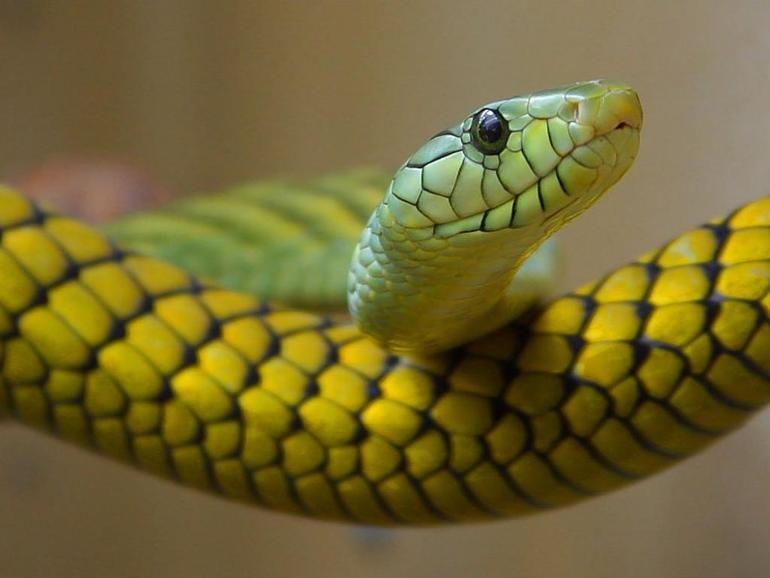Как научится рисовать змею с подарком