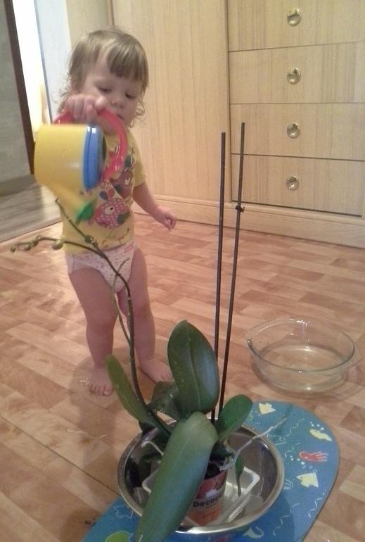 Игры с водой или Курс молодой хозяюшки