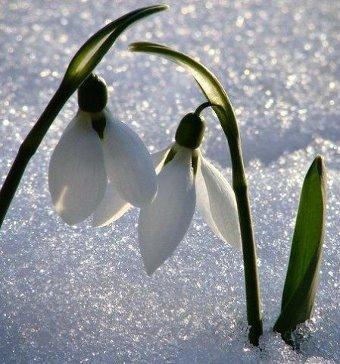Весна! С первым днем весны!