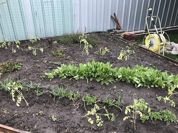 Категория сад огород