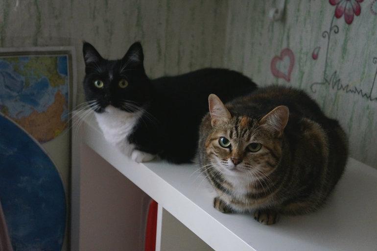 В чёрно-чёрном ящике, жил чёрно-белый кот......))