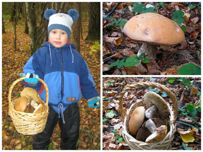 Картинки поход за грибами