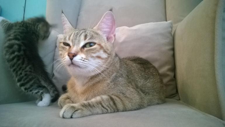 12 метров полета или мой мини-инфаркт - кошка смотрит в окно ...