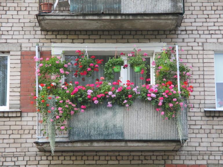 Сентябрь-цветение продолжается,балкон,клумбы. - запись польз.