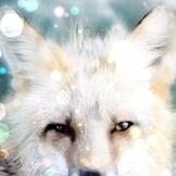 Foxy1504