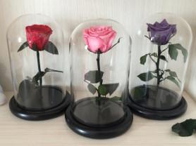 Роза в колбе - купить недорого