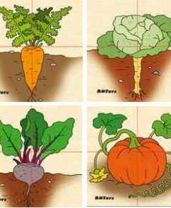 Овощи (разрезные картинки) (RNToys)
