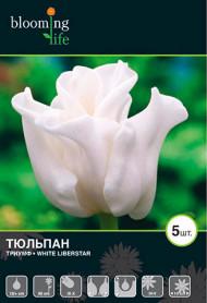 тюльпан Белый Либерстар