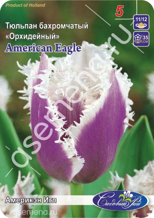 Тюльпан Америкэн ИглAmerican Eagle