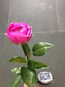 Роза садовая на солн. батарее H=56см.