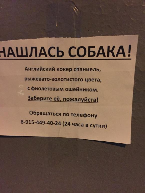 Поликлиника 7-я парковая улица москва