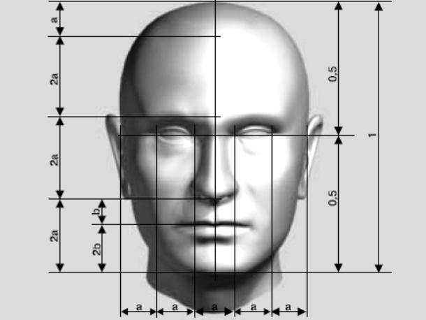 Основные пропорции лица (рис.