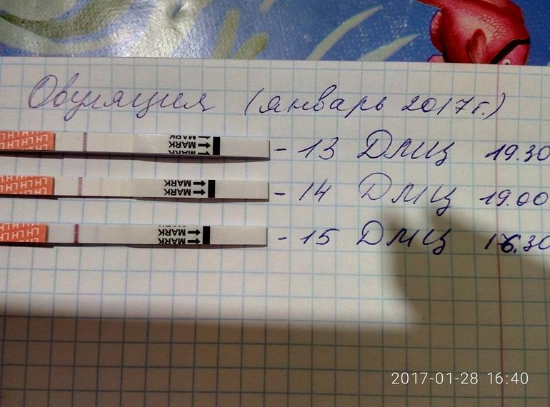 цикл 28 дней овуляция на 22 день таджичка