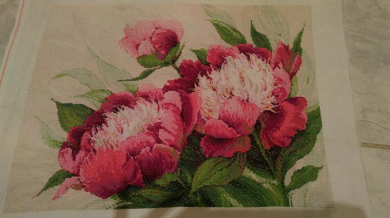 Вышивка схема розовые пионы