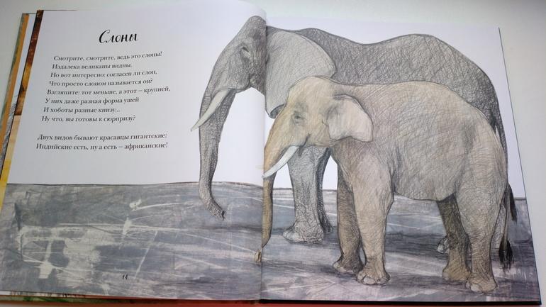 ужасно, когда стихи о слонах русских поэтов фотографий сёрфинга, которые
